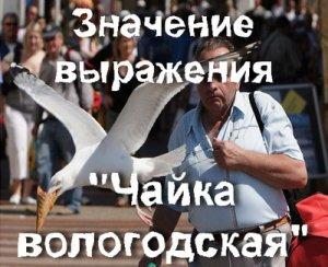 Что значит Чайка Вологодская?