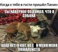 панин и собака мем