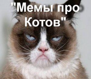Мемы про котов и кошек