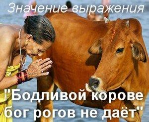 значение поговорки Бодливой корове бог рогов не даёт?