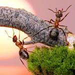 увидеть муравьёв во сне значение?