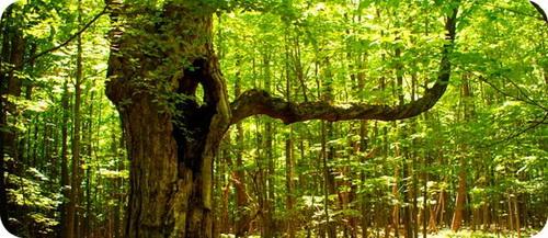 что значит Символ Дерево?