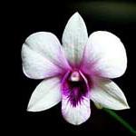 какой цветок по знаку зодиака?