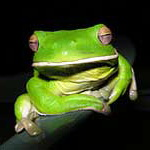 символ удачи лягушка значение.