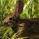 символ удачи кролик значение.
