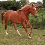 символ удачи лошадь значение.