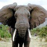 символ удачи слон значение.