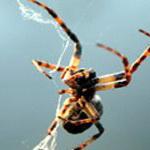 символ удачи паук значение.