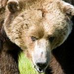символ удачи медведь значение.