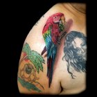 реалистичное тату попугая значение.