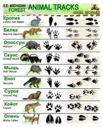как выглядят отпечатки лап животных?