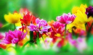 символы цветов.