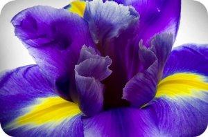 Ирис значение цветка?