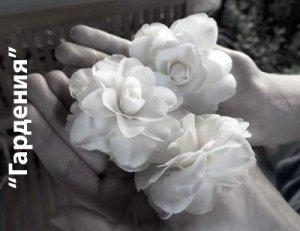 Гардения - значение цветка