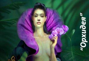 Орхидея - значение цветка