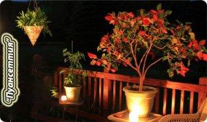 пуантессия рождественский цветок.