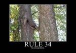 Правило 34 в интернете значение.