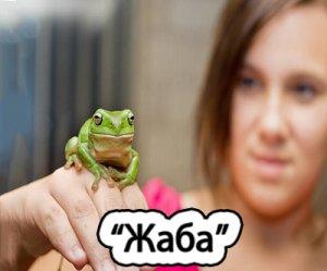 Что такое Жаба?