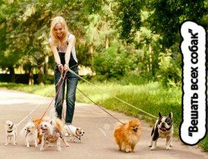 Вешать всех собак - что значит?