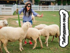 Заблудшая овца - что значит?