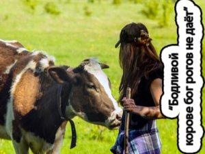 Бодливой корове бог рогов не даёт - значение?