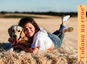 Собака на сене - что значит?