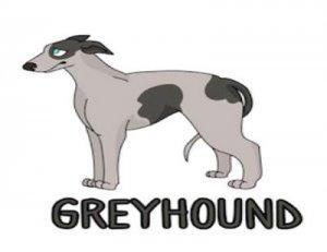 Greyhound - перевод?