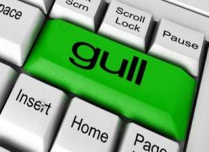 Gull - перевод?