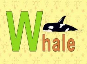 Whale - перевод?