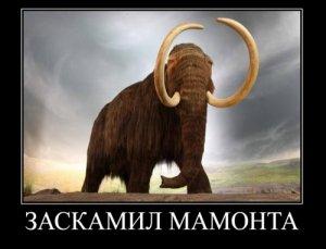 Заскамить мамонта мем.